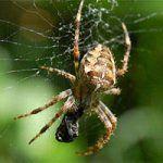 örümcek resmi ilacı ilaçlama spider pics hakkında