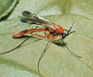 tatarcik resmi ilacı böcek  ilaçlama servisi