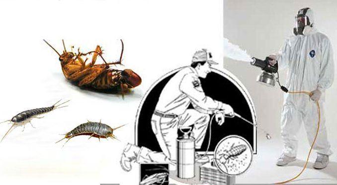 istanbul-ilaçlama-firmasi, hamam böceği ilaçlama