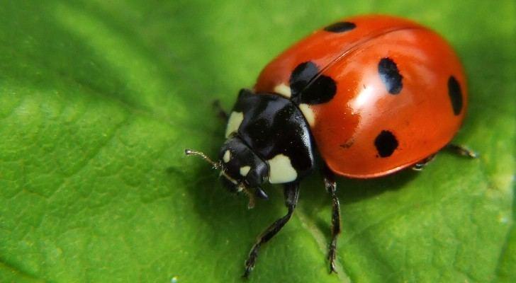 Böcek ilaçlama Firmaları