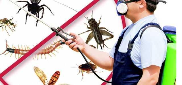 bağcılar böcek ilaçlama