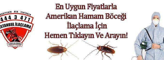 amerikan hamam böceği ilaçlama